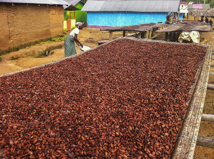 Francesco Veronesi Cocoa Beans Drying In A Village Kakum NP Ghana IMG 0841